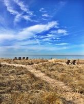 Indiana Dunes 02.19.17